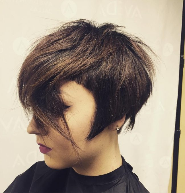 Pixie-Bob Blend with Cut Out Detail