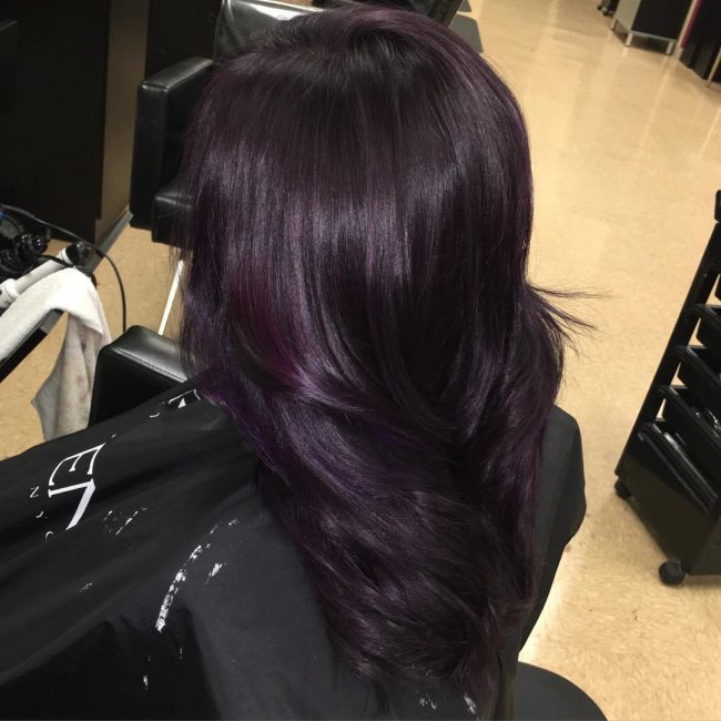 Black Mane with a Dazzling Hint of Dark Purple